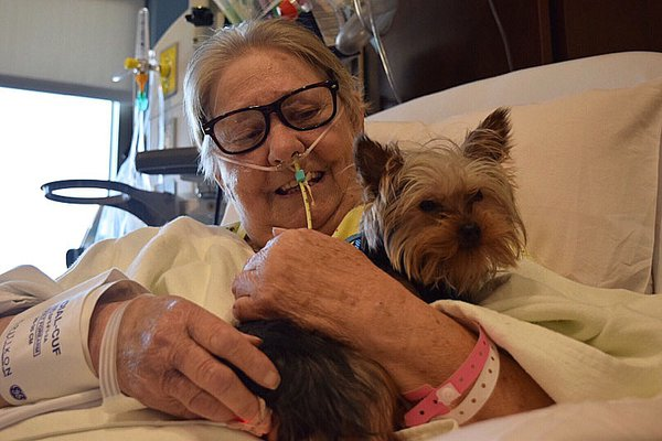 New therapy dog with patient
